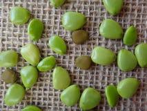 Семена Flowerfence Стоковое Изображение