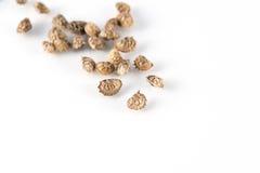 Семена Lupinella Стоковое Фото