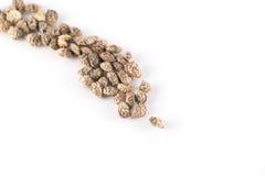 Семена Lupinella Стоковая Фотография