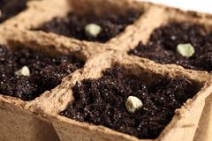 Семена Paes Стоковые Изображения