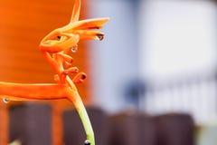 Семена ` s райской птицы Стоковое Изображение RF