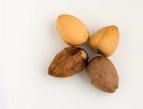 4 семени авокадоа изолированного на белой предпосылке Стоковое Фото