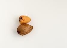 2 семени авокадоа изолированного на белой предпосылке Стоковые Фотографии RF