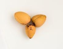 3 семени авокадоа изолированного на белой предпосылке Стоковые Изображения