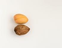 2 семени авокадоа изолированного на белой предпосылке Стоковое Изображение RF