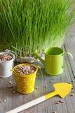 Семенозачаток зерна и пшеницы, и инструменты заботить для ее стоковая фотография rf