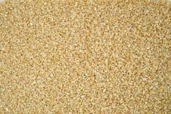 Семенозачаток риса стоковое фото
