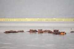 Семья бегемота отдыхая в национальный парк озере, Найроби, Ke Стоковые Фото