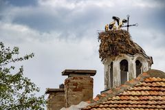 Семья белого аиста, аист аиста в гнезде на восточной правоверной башне церковного колокола в болгарской деревне Bukovo стоковое изображение