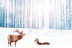 Семья благородных оленей в снежном голубом изображении фантазии рождества леса зимы стоковая фотография rf