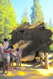 Семья в национальном парке секвойи осматривая большое crossection старой секвойи Стоковое Изображение RF