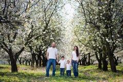Семья в саде вишневого цвета Стоковые Фото