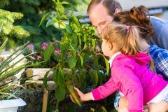 Семья в саде жать болгарский перец стоковое изображение rf