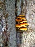 Семья гриба растет на дереве Стоковые Изображения