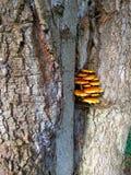 Семья гриба растет на дереве Стоковое фото RF