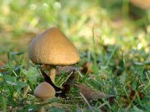Семья гриба Стоковое Изображение