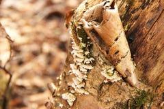 Семья грибов на дереве Стоковые Фото