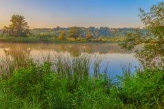Семья лебедей на озере Стоковая Фотография