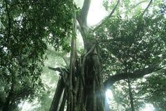 Семья дерева стоковая фотография rf