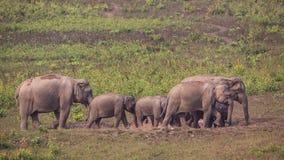 Семья индийского слона Стоковое Фото