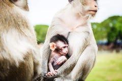 семья Индонесия bali monkeys звеец стоковые фото