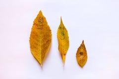 Семья лист падения Стоковое Изображение RF