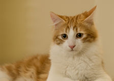 семья кота любознательная стоковое изображение rf