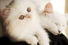 Семья кота Стоковое Фото