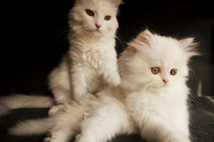 Семья кота Стоковые Фото