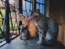 семья кошачая стоковые фото