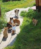 семья кошачая Стоковое Фото