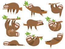 Семья леней шаржа Прелестное животное лени на животных тропического леса джунглей смешных на тропическом комплекте вектора лесных Стоковые Фото