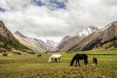 Семья лошадей в киргизских горах Стоковые Изображения RF