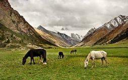 Семья лошадей в киргизских горах Стоковое Изображение