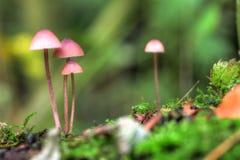 Семья гриба макроса Стоковая Фотография RF