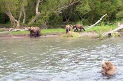 Семья медведя, и новички медведя Стоковое Изображение