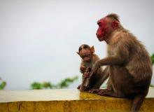 семья младенца холит ее мать обезьяны macaque Стоковое Фото