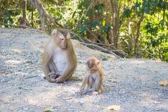семья младенца холит ее мать обезьяны macaque Стоковая Фотография RF