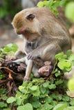 Семья обезьяны Стоковое Фото