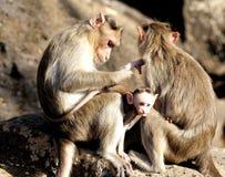 Семья обезьяны стоковое фото rf