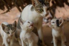 Семья одичалых котов Стоковое Фото