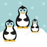 Семья пингвина в предпосылке темы льда Стоковые Изображения RF