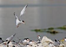 Семья птицы Стоковое Изображение RF