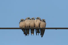 Семья птицы Стоковые Фотографии RF