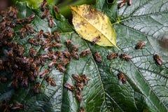 Семья пчелы Стоковое Изображение