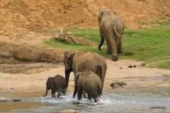 семья слона Стоковые Фотографии RF