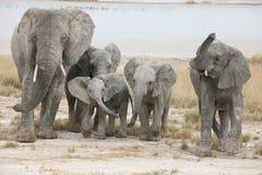 семья слонов Стоковая Фотография RF