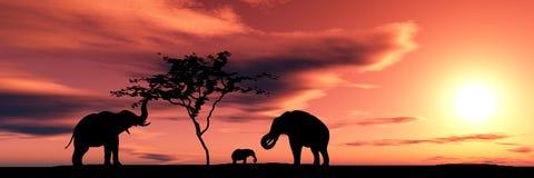 семья слонов Стоковые Изображения