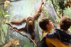 Семья смотря обезьяну Стоковое Фото