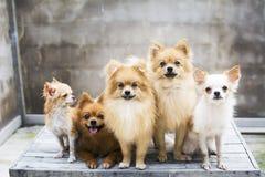 семья собаки Стоковое Изображение